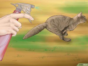 النشادر لطرد القطط