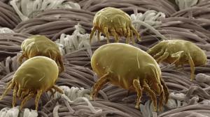 حشرات الرطوبة