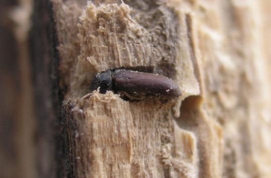 اشكال حشرات الخشب ابجديه Abjadih