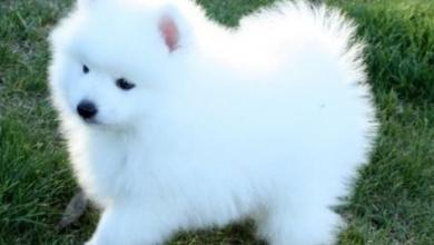 Photo of انواع الكلاب الصغيرة