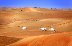 اماكن سياحيه دبي