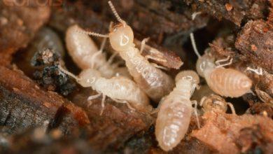 Photo of أسباب وجود النمل الأبيض في البيت