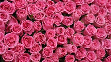 Photo of درجات اللون الزهري