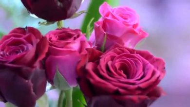 Photo of معنى الورد الوردي