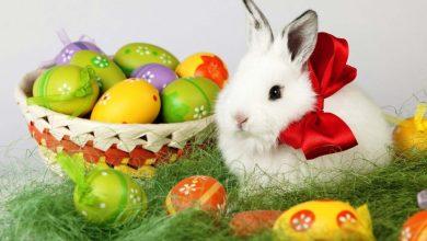 Photo of عيد القيامة