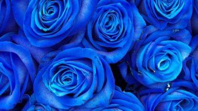 Photo of ما معنى اللون الازرق