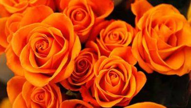 Photo of اللون البرتقالي في علم النفس