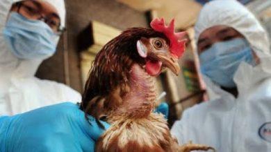 Photo of انفلونزا الطيور
